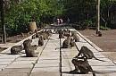 Chương Trình - Vịnh Nha Phu -  Khu Du Lịch Thác Yangbay