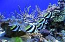 VNT 20. Hành Trình Thám Hiểm Đại Dương Tại Đảo Khỉ