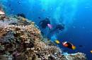 VNT 21. Hành Trình Đi Bộ Dưới Đáy Biển