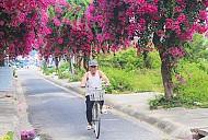 Đẹp Lãng Mạn Con Đường Hoa Giấy Ở Nha Trang