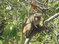 """Khám Phá """"Vương Quốc Khỉ"""" ở Nha Trang"""