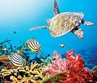 Những Điểm Đến Lặn Biển Ngắm San Hô Tuyệt Nhất Việt Nam