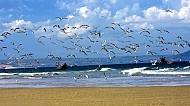 Rợp cánh hải âu trên biển trời Nha Trang