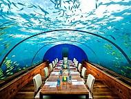 Trải Nghiệm Và Ấn Tượng 5 Nhà Hàng Dưới Đáy Đại Dương