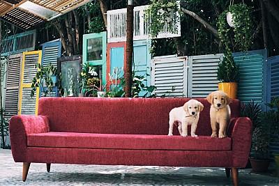 Khám Phá Homestay và Hostel Đẹp Ngất Ngây Ở Nha Trang