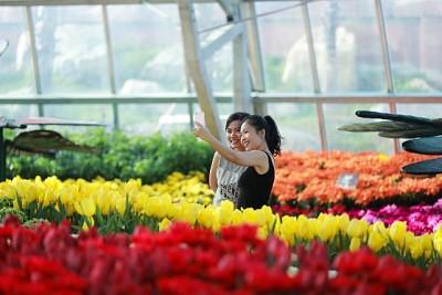 Muôn Hoa Khoe Sắc Đón Tết Trong Khu Vườn Rộng 35.000 m2