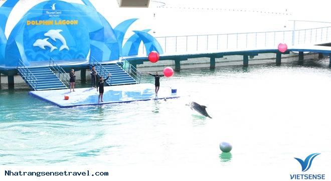 Kỷ Lục Đèn Lồng Cá Heo Lớn Nhất Việt Nam Ở Vinpearl Land Nha Trang