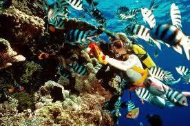 Tour Du lịch Nha Trang - Vinpearlland - Lặn Biển Nha Trang