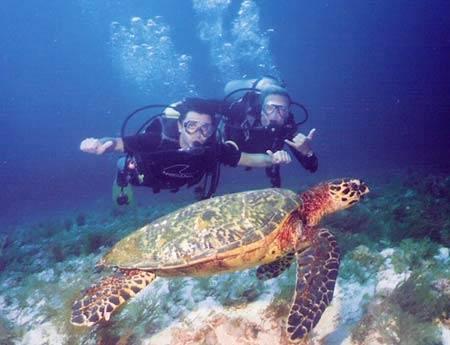 Tour Du Lich Nha Trang Thám Hiểm Đại Dương Tại Đảo Khỉ