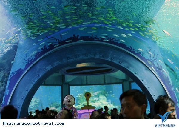 Viện Hải Dương Học Thành Phố Nha Trang Khánh Hòa